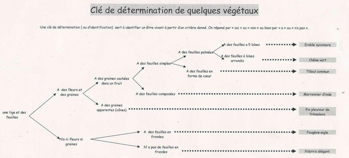 Cle determination avegetaux site