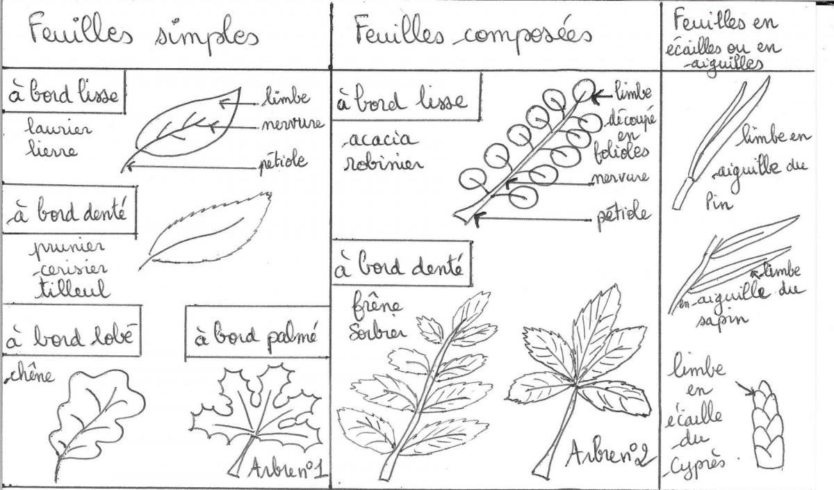 Dessins des feuilles