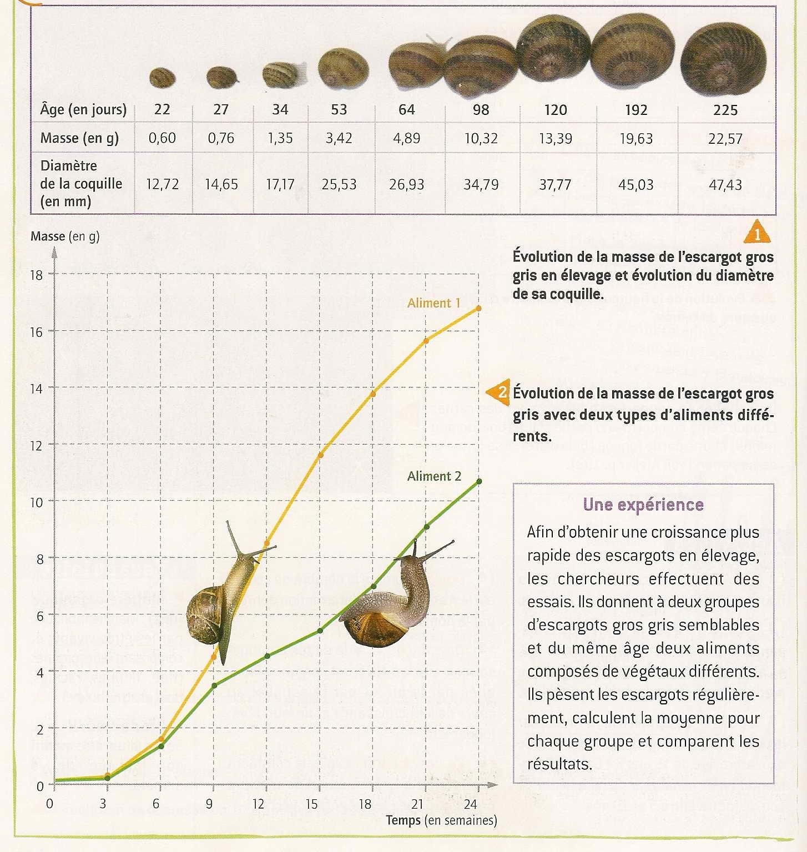 Escargot croissance