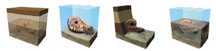 Fossile ammonite a remettre dans l ordre